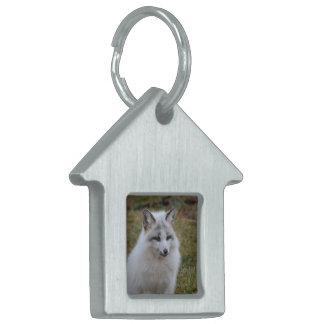 Fox blanco adorable placas de nombre de mascota