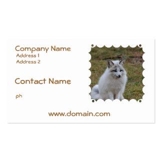 Fox blanco adorable tarjetas de visita