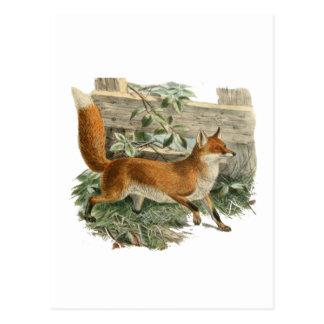 Fox by a Fence Postcard