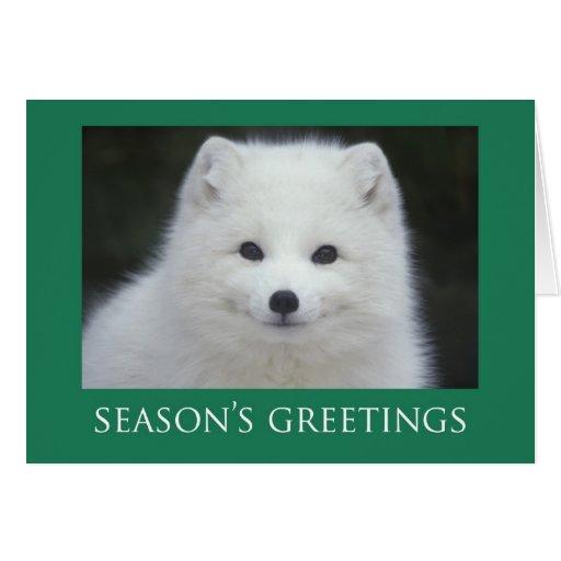 Fox Christmas Cards
