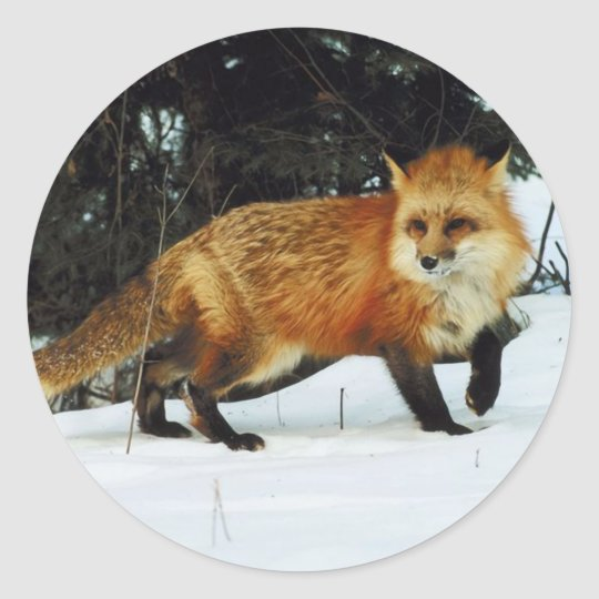 Fox Classic Round Sticker