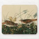 Fox colored sparrow mousepads