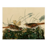 Fox colored sparrow post cards
