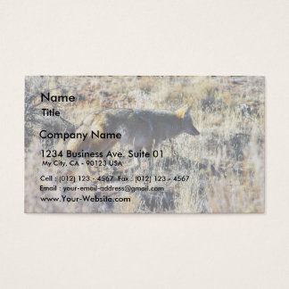 Fox Coyotes Wild Anilmal In Field Business Card