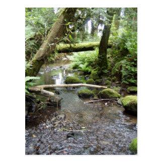 Fox Creek, Rainier, Oregon Postcard