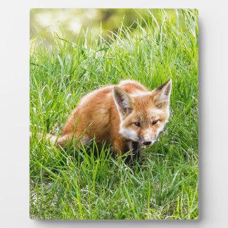 Fox Cub Plaque