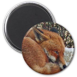 Fox day dreaming magnet