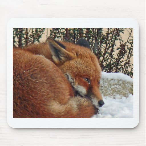 Fox day dreaming mouse pad
