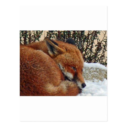 Fox day dreaming postcard