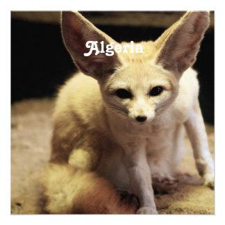 Fox de Argelia Fennec Comunicados Personales