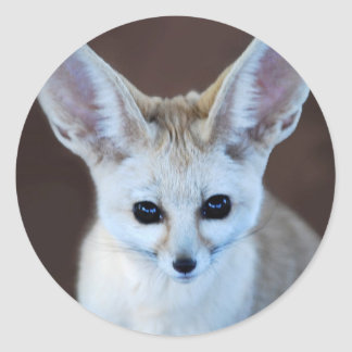 Fox de Fennec Pegatina Redonda