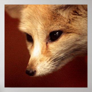 Fox de Fennec Póster