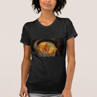 Fox de Fennec que toma una siesta dentro de un Camisas