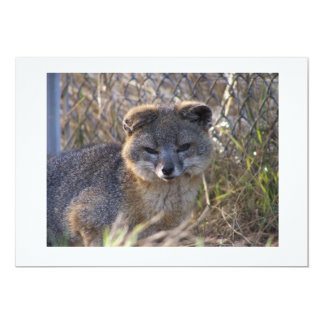 Fox de isla de las Islas del Canal Invitación 12,7 X 17,8 Cm