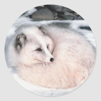 Fox de la nieve pegatina redonda