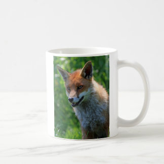 fox el café hermoso rojo de la foto, taza del té
