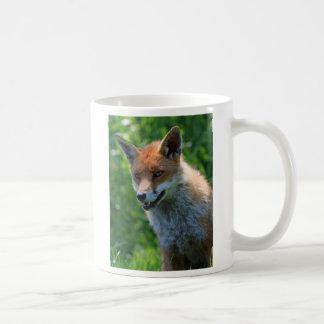 fox el coffe de la foto o la taza hermoso rojo del