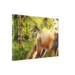 Fox en el bosque impresiones de lienzo