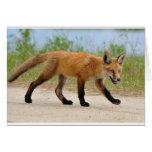 Fox en el funcionamiento tarjeton