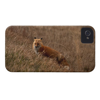 Fox en la hierba carcasa para iPhone 4