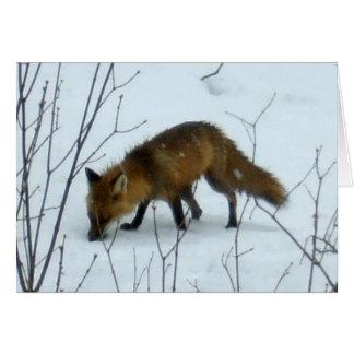 Fox en la nieve - tarjeta en blanco