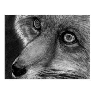 Fox Face Postcard