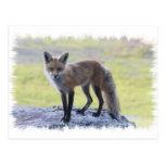 Fox - Fauna de Maine Postal
