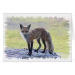 Fox - Fauna de Maine Tarjeta