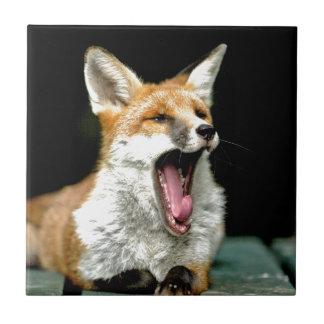 Fox - favorable foto azulejos ceramicos