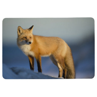 fox floor mat, foxy rug, fox cub mat home decor