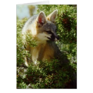 Fox gris felicitaciones