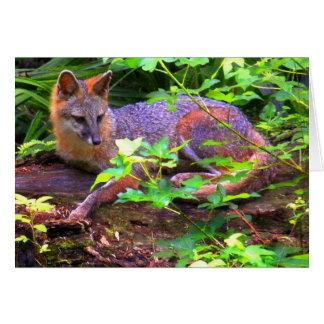 Fox gris hermoso tarjetas