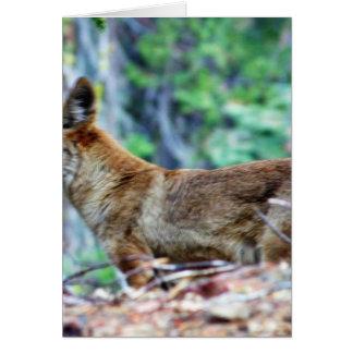 Fox gris tarjeta de felicitación
