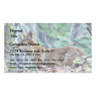 Fox gris tarjetas de visita