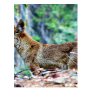 Fox gris tarjetas postales