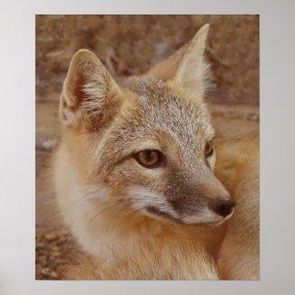 Fox II Print