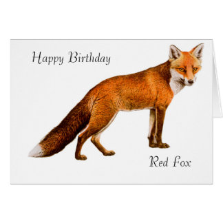 Fox image for Birthday-greeting -card Card