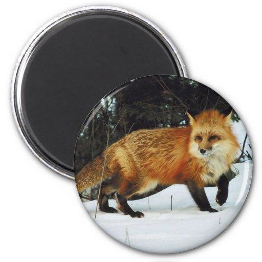 Fox Imán Redondo 5 Cm