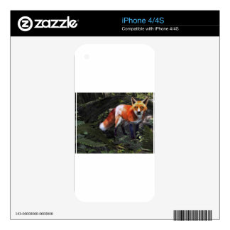 Fox in the Forest Decals For iPhone 4S