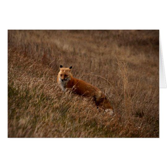 Fox in the Grass Card