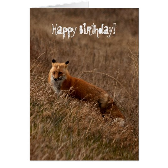Fox in the Grass; Happy Birthday Card