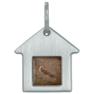 Fox in the Grass Pet ID Tag
