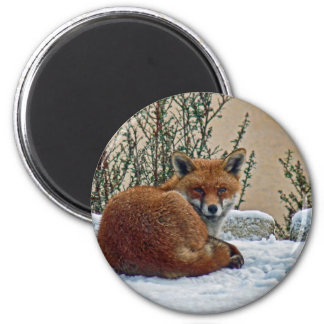 Fox in the snow 2 inch round magnet