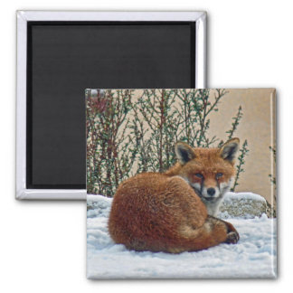 Fox in the snow 2 inch square magnet