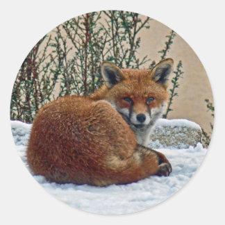 Fox in the snow classic round sticker