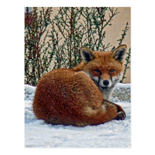 Fox in the snow postcard