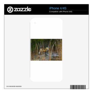 Fox in Woods Skins For iPhone 4S