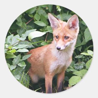 Fox joven 1 etiqueta redonda