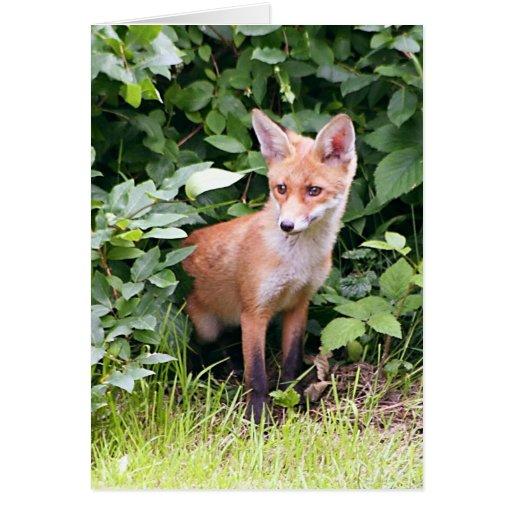 Fox joven 1 tarjeta de felicitación
