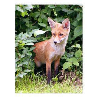 Fox joven 1 postal